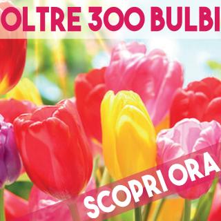 Oltre 300 varietà di Bulbi