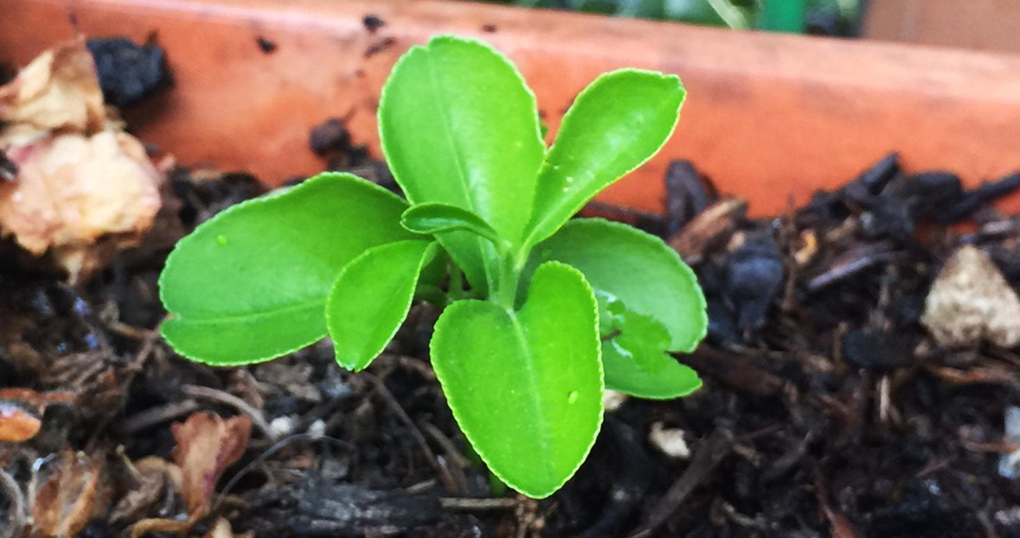 Come Si Piantano I Tulipani il 1° blog sui bulbi online